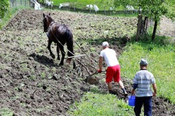 peasants in the field, like maize with the horse and the traditional plow