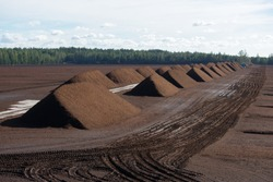 Peat harvesting. Field with piles of harvested peat.