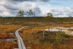 Peat marsh landscape in nature park in Estonia. Cloudy autumn day.