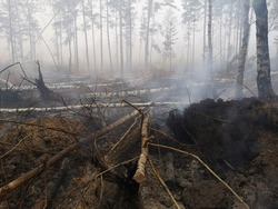 Peatlands are on fire. Forest fire and its consequences. Smoke black earth burnt. Burnt tree trunks and ashes. Charred branches.