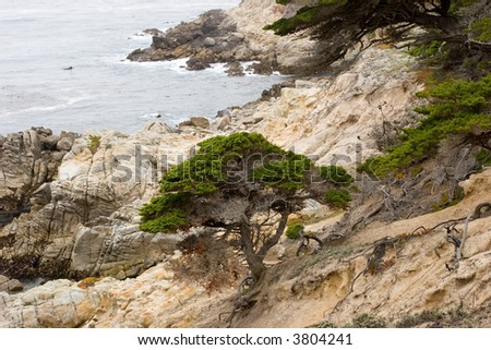 Pebble Beach Central California coast