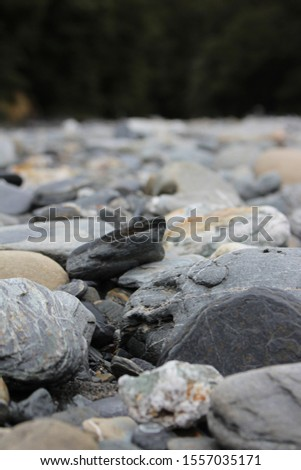Pebbles, pebbles and more pebbles