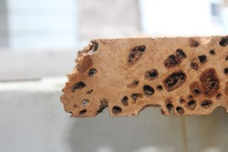 Pecky cypress lumber wood board for construction material. Pecky cypress, taxodium distichum, is attacked by a fungi causing the holes in the wood.
