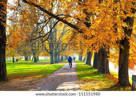 Pedestrian walkway for exercise lined up with beautiful fall trees