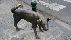 Peeing dog in Brussel When we walk around the city more over looking for peeing boy we can see peeing dog as well.
