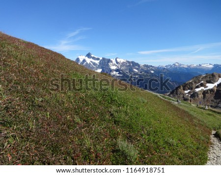 Peek a boo view of Mount Shuksan from a grass slope in summer