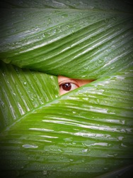 Peek at background eyes leaves photo taken on June 20 2021 Thailand