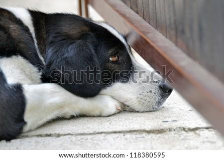 Peeper Dog Is Watching