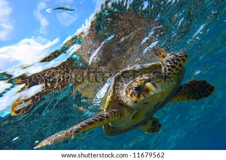 peery looking turtle stock photo