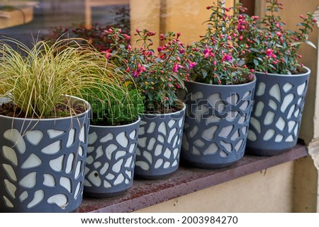 Photo of Pelargonium and geraniums in flower pots on the windowsill of a rural house outside against a terracotta-colored wall. . High quality photo