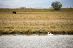 Pelican and Heron on Bear River