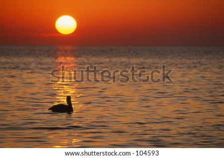 Pelican at sunrise in the Florida Keys