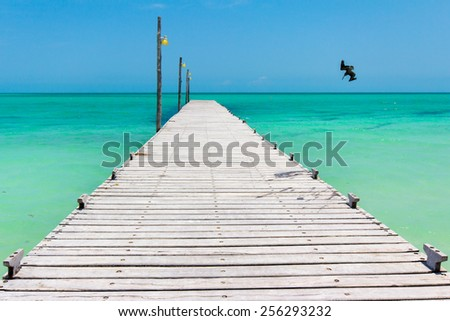 Pelican diving for fish near pier on Holbox Island, Mexico