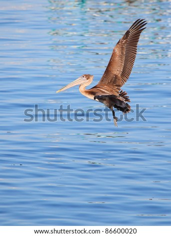 Pelican flying above water
