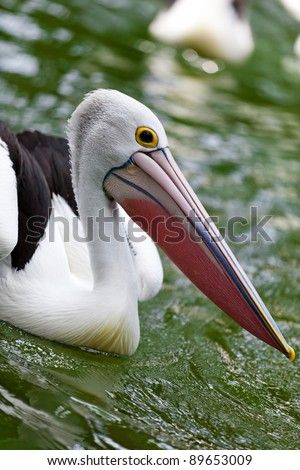 Pelican - not only a pencil