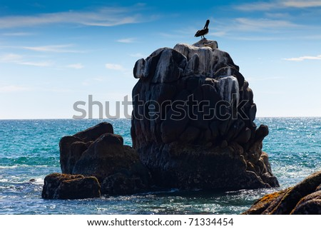 Pelican on Rock Formation in Cabo San Lucas, Mexico