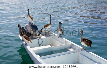 Pelican perched on a boat in the water looking for fish in Cabo San Lucas, Mexico