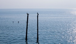 Pelicans gliding over water and sitting on pier beams on a calm north carolina ocean landscape, surrounded by deep blue water and cloudless skies