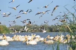 Pelicans in Djoudj National Bird Sanctuary in Senegal