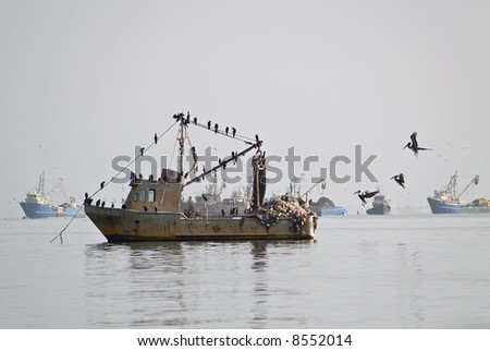 Pelicans on fisher ship at Paracas, Peru