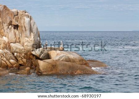 Pelicans resting on the rocks of Banderas Bay, Mismaloya, Mexico