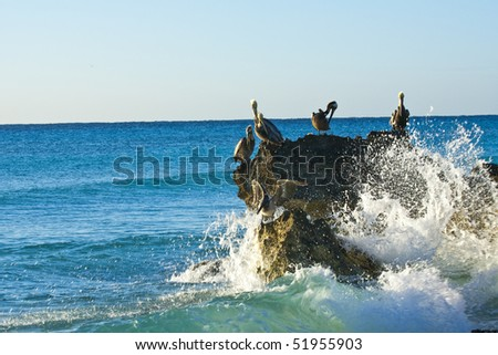 Pelicans sitting on a rock