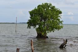 Pemandangan sore hari di Tanjung Moko Dompak