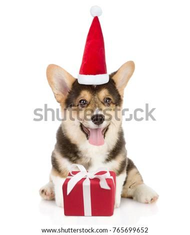 pembroke welsh corgi puppy with ...