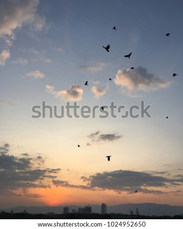 Penang Island, 15 February: Sunset view of Penang Island with the birds flying around to go back home. #1024952650