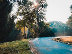 Penang, Malaysia : 6 August 2020 - Beautiful morning rays of light behind the trees near the road up.