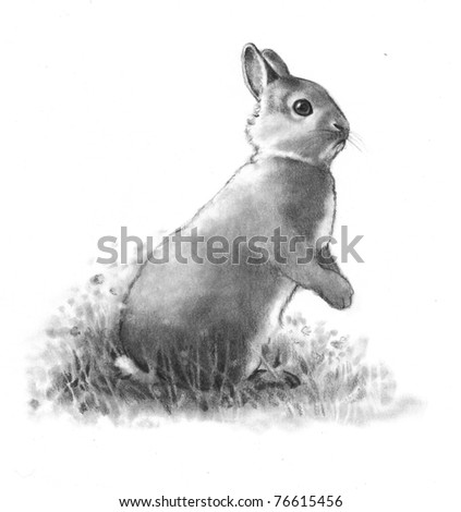 Pencil Drawing of Rabbit on Hind Legs