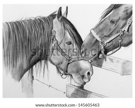 Pencil Drawing of Two Draft Horses Nuzzling: love between two horses nuzzle each other as they meet along a fence on a summer evening.