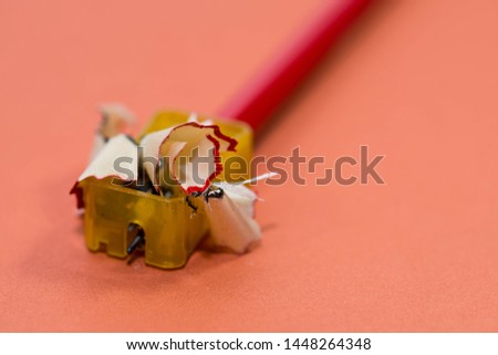 Pencil on the sharpener, focus on the sharpening waste on light red background.