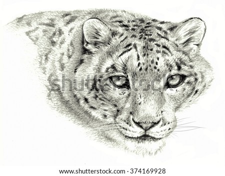Pencil sketch - Isolated snow leopard`s head on white background #374169928