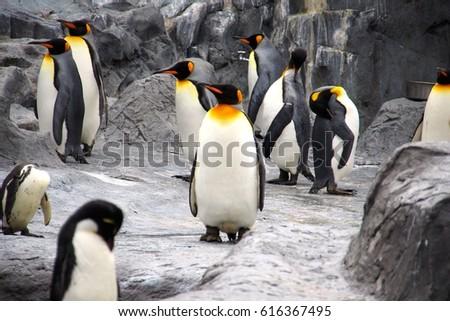 Penguin #616367495