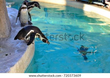 penguin  #720373609
