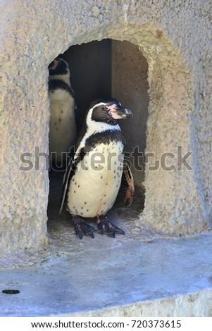 penguin #720373615