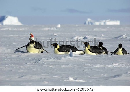 Penguin Christmas procession