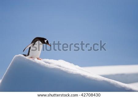 penguin climbing down a snow hill