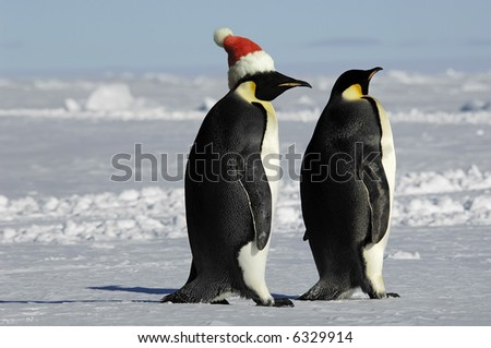 Penguin couple at Xmas