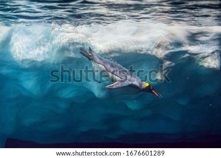 Penguin diving under ice, underwater photography . Сток-фото ©