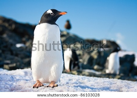 penguin dreaming sitting on a rock, mountains in the background