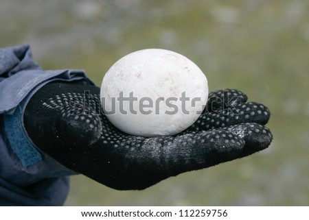 Penguin egg in hand with glove