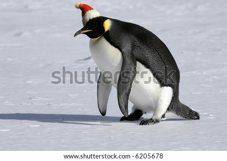 Penguin getting up for Christmas