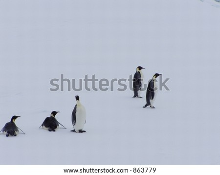 Penguin group on a floe
