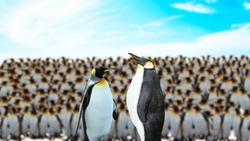 penguin group - Penguin community stock image.