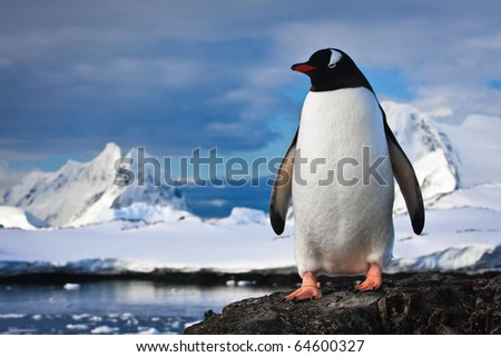 penguin have fun standing on the rocks