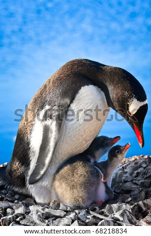 Penguin Mother and her two Children in Antarctica