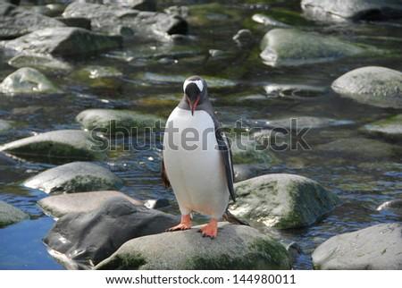 Penguin on rock in Antarctica