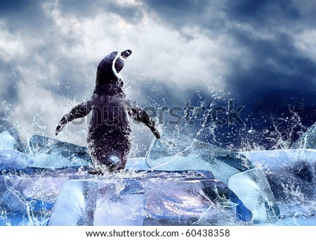 Penguin on the Ice in water drops.
